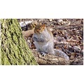Squirrels of Highgate Wood, London :-)