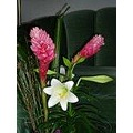 Hawaiian Ginger and Easter Lilly