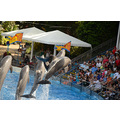 seaworld orlando florida show dolphins people