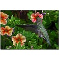 humming bird feeding flowers nature