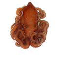 octopus sealife wildlife animal nature
