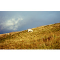 Wales Clouds Lanscape Sheep Nature