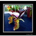 nature orchid flower