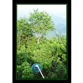 philippines lighpost foliage green