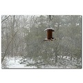 whitechristmas birdfeeder snow yard window