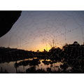 sunrise spider web perth hills littleollie