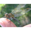 dragonfly finger macro