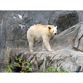 Winnipeg Canada Assiniboine Zoo bears