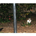 2007 december07 holidays apartment complex courtyard bunny
