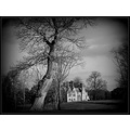 tree house black and white