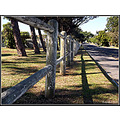 fence trees road