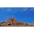 Mountain Tree Top Blue Sky Rock Nature Landscape Iran Persia Khaf Tor
