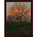 nature landscape field tree bush sky sunset fog dusk