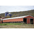 upstate newyork road autumn fall foliage barn farm cows