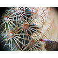 nature prickle cactus