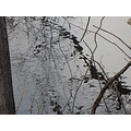 week 3 reflection linden park naugatuck river darker