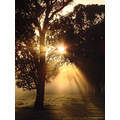 sunrise caught tree morning perth hills littleollie