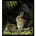 nature animal rabbit fur