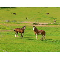 Farm Field Animals Horses
