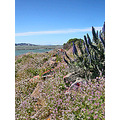 bay view sanfranciscobay bayareaviewfph wildflowers spring abulb2013fph