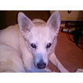 sweet bonnie dog animal pet friend RIP