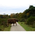 netherlands crailo animal cattle landscape nethx craix animx cattx landn