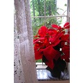 flower red window curtain