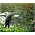 nature great blue heron
