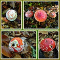 amanita muscaria Fliegenpilz amanite tuemouche fungi mushroomclub collage