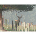 deer stag herd protection littleollie