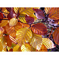 autumn leaves autumn colours leaf gold orange yellow brown woods fall
