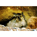 Female Warthog Animal Living Desert Pankey Wildspirit