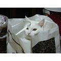 kuppy cat whitecat Japan Niigata kitty bag
