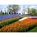 Spring tulip festival.....I am looking forward to it already.