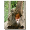 netherlands arnhem zoo animal elephant nethx arnhx zoox animx elepx