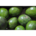 sunshinestate miamibeach florida avocado vegetable