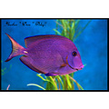 Aqarium fish color dora