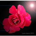 rose flower element lights