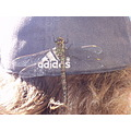 Dragonfly landed on Bill's head!