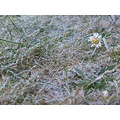flower grey freeze winter great grass end alone