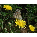 flowers nature butterfly