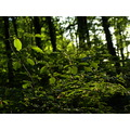 forest green trees kmphotography