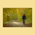 crosscountry bicykle Buda mountain forest autumn Budapest
