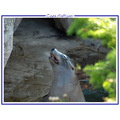 seal animal nature zoo CH1988