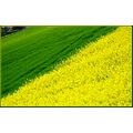 nature field landscape France april spring colours green yellow