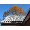 house roof tree autumn