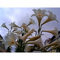 2008 garden white yellow flowers bloom funchal madeira portugal green island