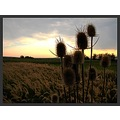 nature landscape wild wheat bush tree spike sky cloud