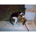 beagle little dog puppy sweet sleep