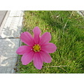 cosmos in my work place